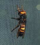 ハチ捕獲の神業01