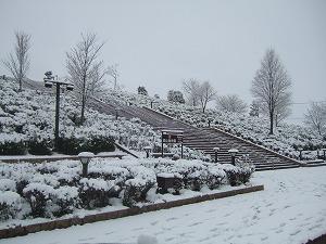 久しぶりの雪、やっぱりな。