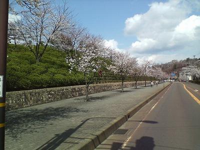 散歩をする日
