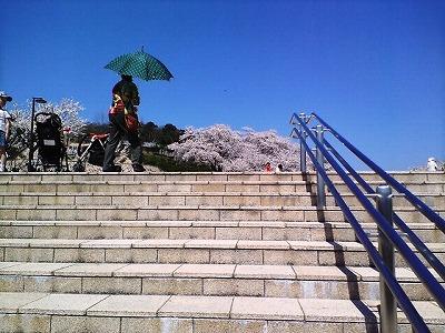 西山公園の桜は今が盛り01
