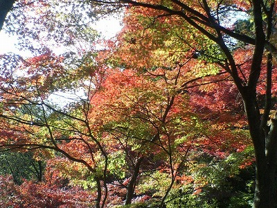 秋の散歩・収穫は色々01