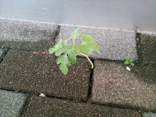 image/shigeshi-2006-08-12T23:55:12-1.jpg